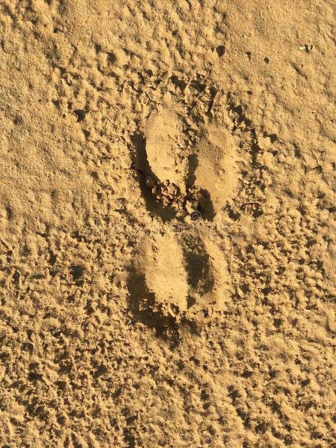 A Photo Of Two Cow Footprints Stock Photo - Image of hoof ...