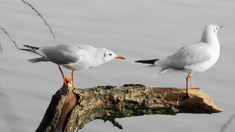 Photo of Two Seagulls Perched on Tree Branch stock photos