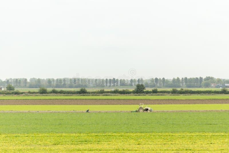 Farmer in typical Dutch landscape stock photos