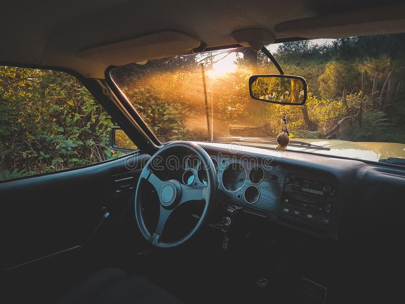 Photo of Vehicle Interior Near Green Leaf Plants royalty free stock photos