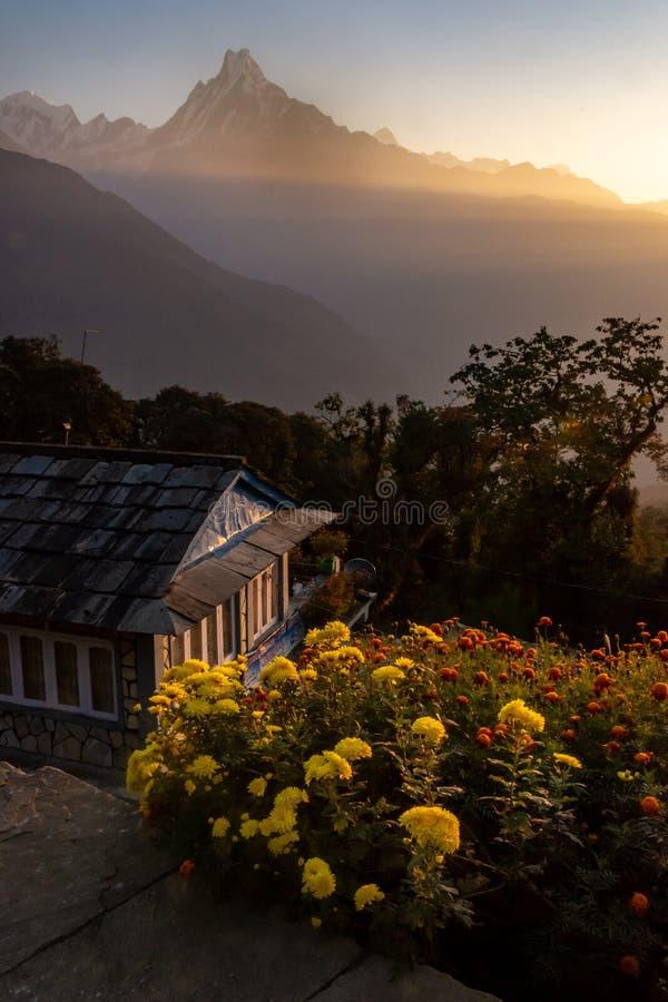 Photo verticale de crête Machapuchare de queue de poissons pendant le lever de soleil avec les fleurs jaunes et rouges comme prem photo stock