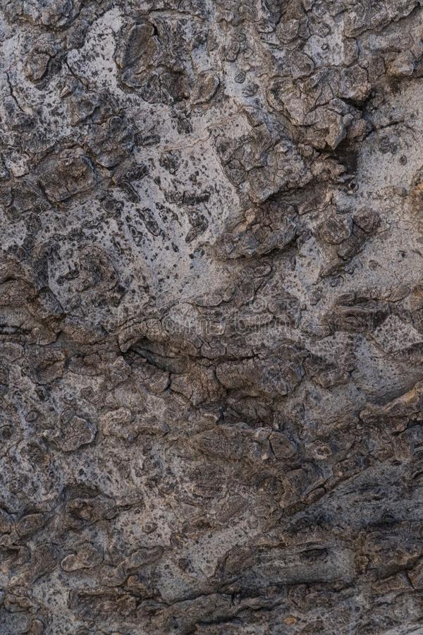 Photo verticale et à feuilles persistantes d'écorce d'arbre macro images libres de droits