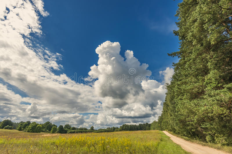 Countryside road near pine forest royalty free stock photo