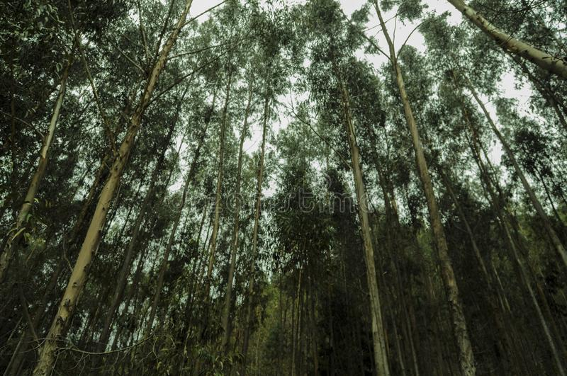 Lost in the big forest royalty free stock photo