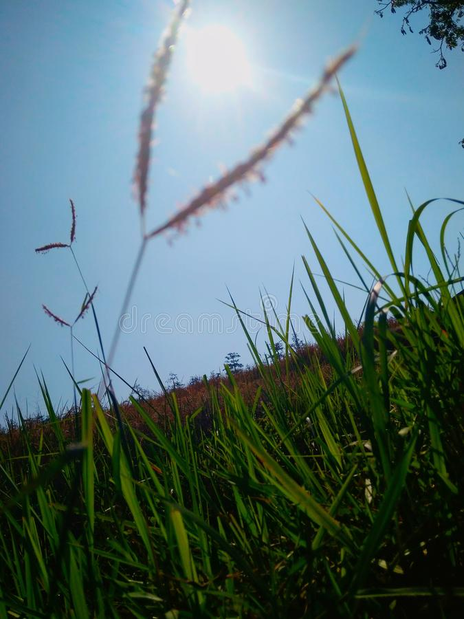 Weeds With The Sun Shining . Tegal , Indonesia. This photo was taken when I was on vacation to Batu Agung, Balapulang, Tegal, Indonesia stock image