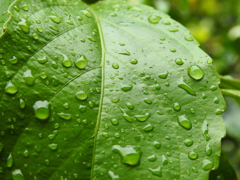 Closeup photo of green leaf royalty free stock images