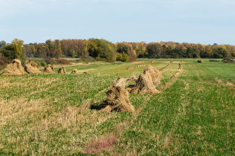 Amish Wheat Shocks. This photo was taken on the Tug Hill Plateau in Lewis County, New York stock photography