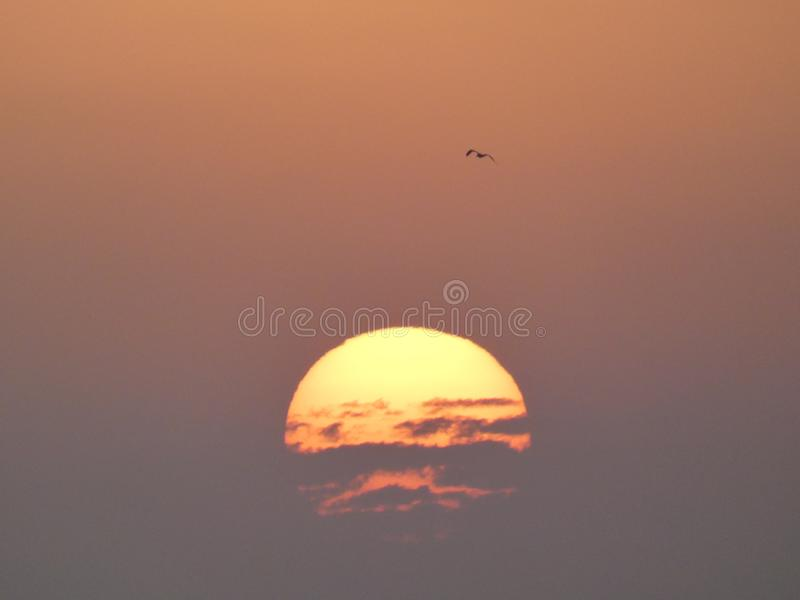Fight between the sun and the clouds with a bird flying in the sky during a sunset in the Camargue in Provence stock images