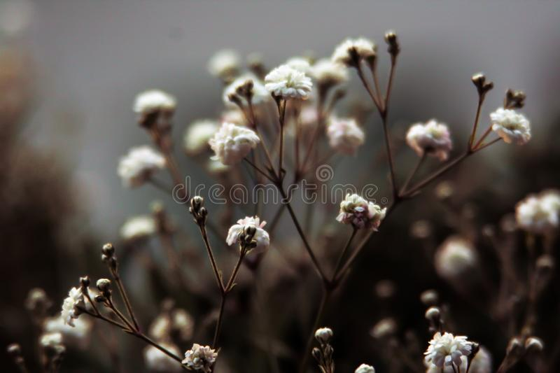 Photo of White Flower Buds royalty free stock photos