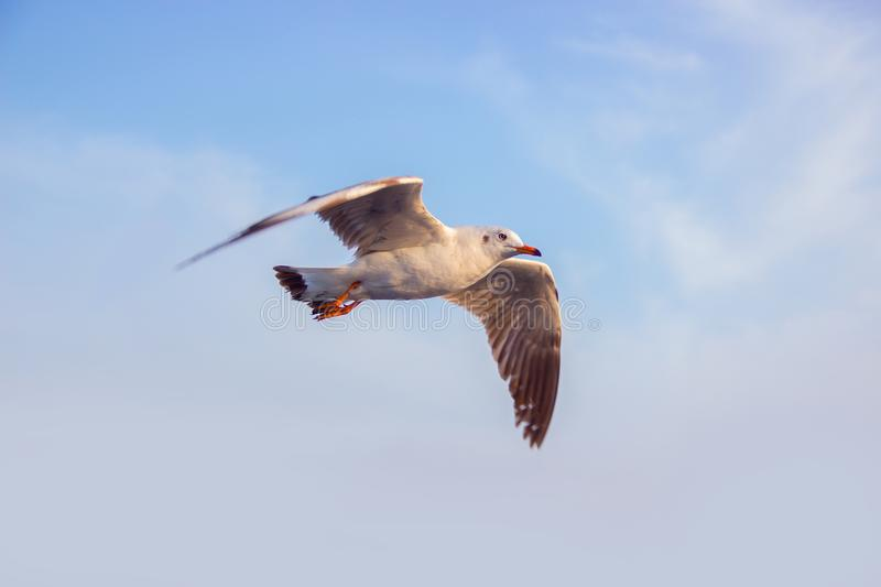 Photo of White Seagull Flying Under Blue Sky royalty free stock images