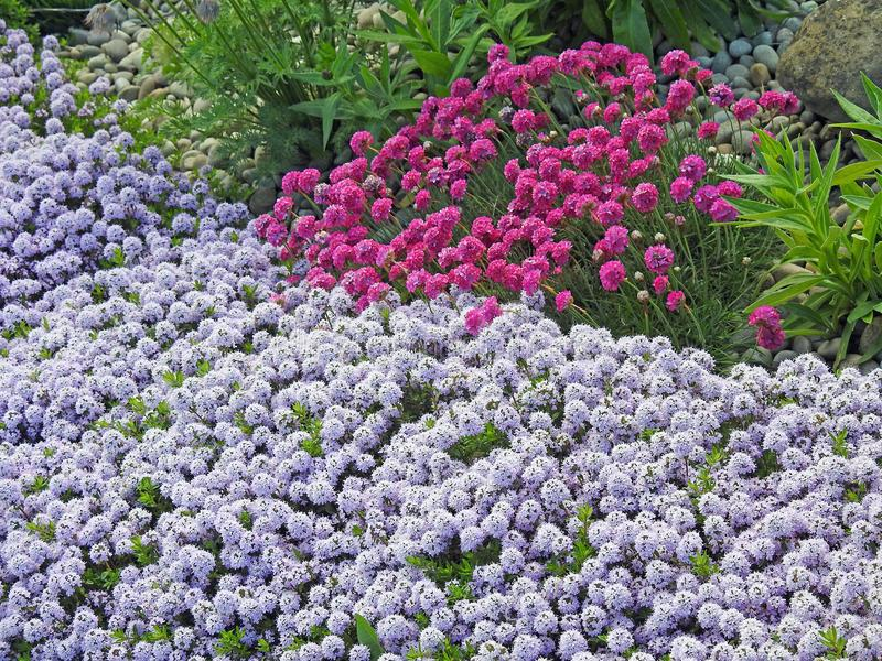 Wild flowers garden natural plants thrift stock photo