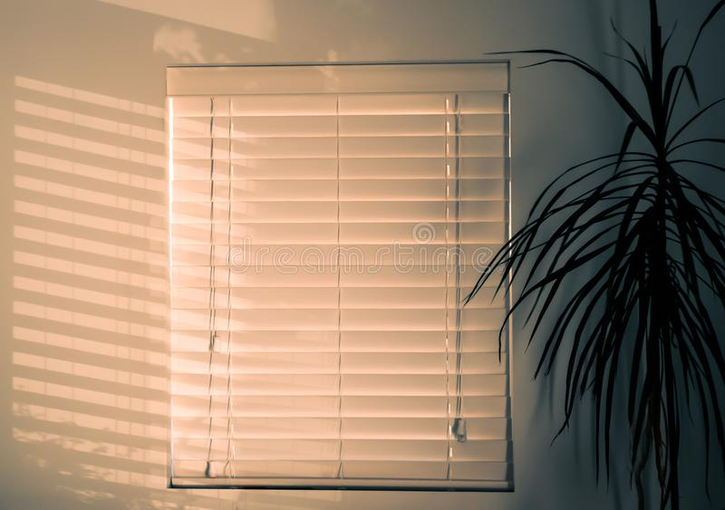 Photo of Window Blinds Near Plant stock photography