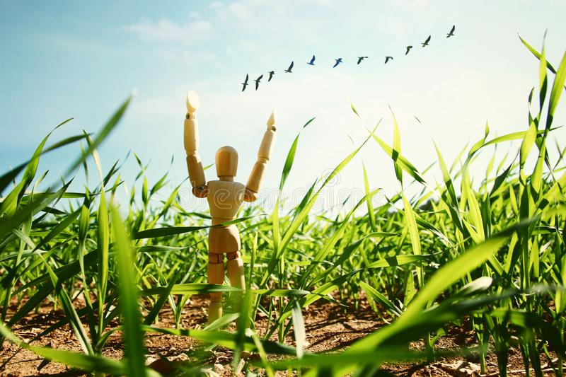 Photo of wooden dummy standing in field looking forward at flying birds. think big and dream concept. Photo of wooden dummy standing in field looking forward at stock image