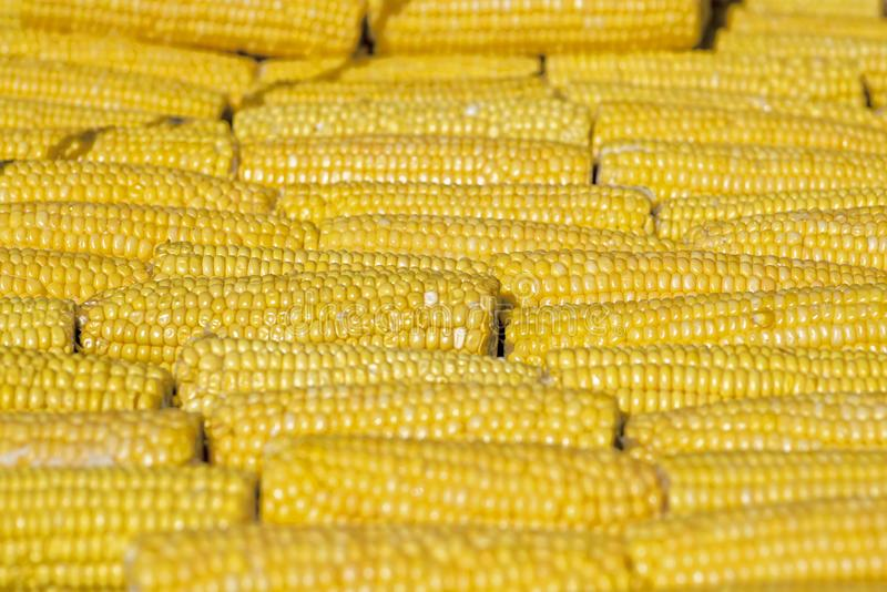 Photo of yellow corn background. Cooking Corn. A few corn. Maize close-up. Cereal crops concept royalty free stock photography