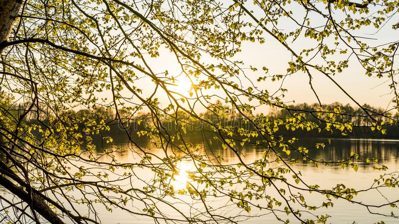 Photo of Yellow Leaf Tree With Background of Body of Water stock photo