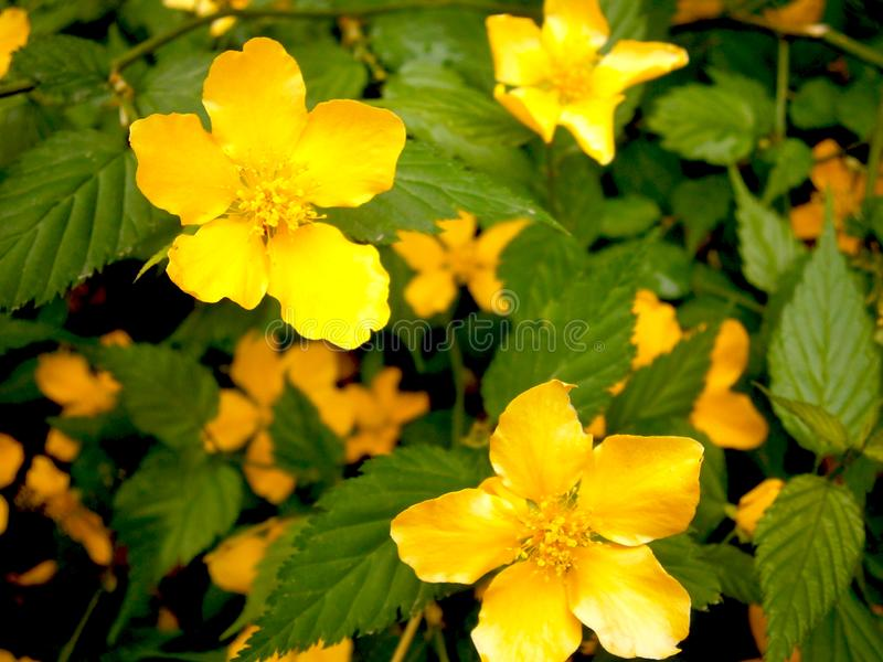 Photo of yellow wildflowers. Macro shooting. stock image
