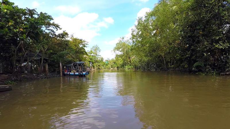 A local tropical river in Oceania. In the photo You can see a A local tropical river in Oceania royalty free stock photo