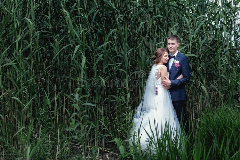 Photo young newlyweds near tall green reeds royalty free stock photo