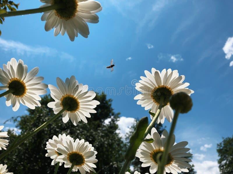 Photobomb de la abeja fotos de archivo libres de regalías