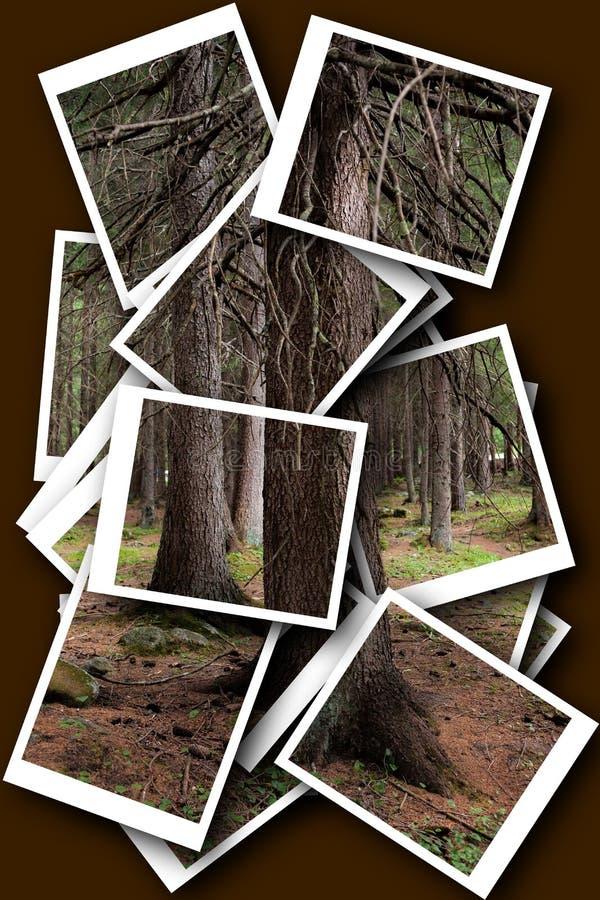 Photocollage w lesie zdjęcie stock