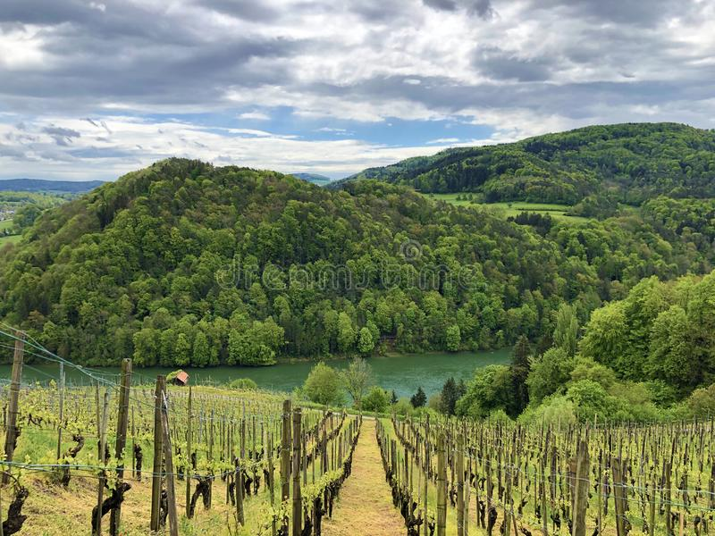 Photogenic виноградники и леса низменности в долине Рейна, Buchberg стоковая фотография rf