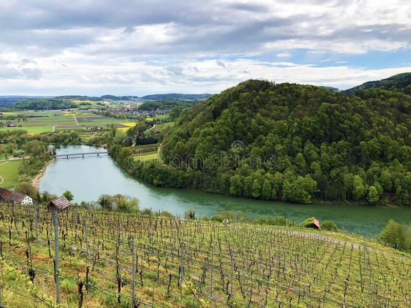 Photogenic виноградники и леса низменности в долине Рейна, Buchberg стоковые изображения