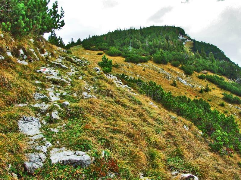 Photogenic выгоны и холмы горной цепи Alpstein стоковые фото