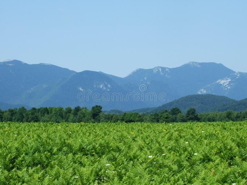 Photogenic гора Velebit стоковые фото