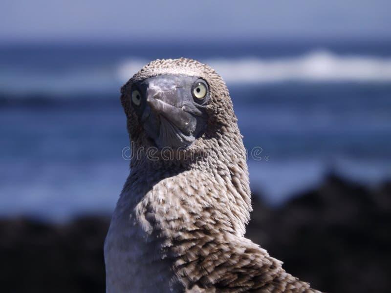 Photogenic птица стоковые фотографии rf