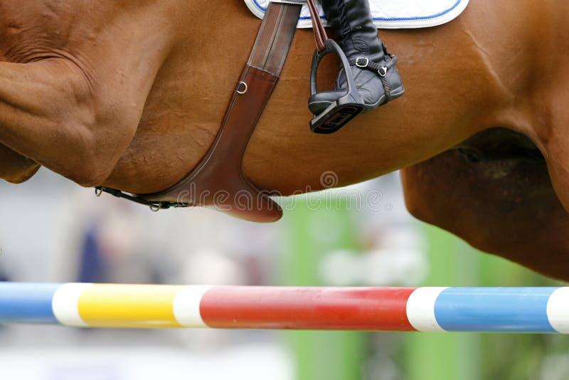 Photograp equino do detalhe (inche as circunferências da sela, a bota do cavaleiro e uma barreira) fotos de stock royalty free