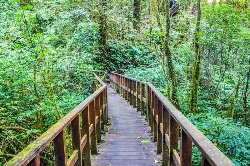 Photograph of Brown Wooden Bridge royalty free stock photo
