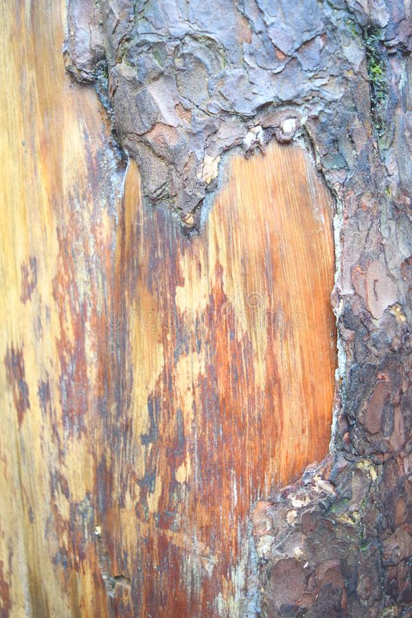 Structure and Layers in Tree Bark - Abstract Natural Texture and Pattern royalty free stock photos