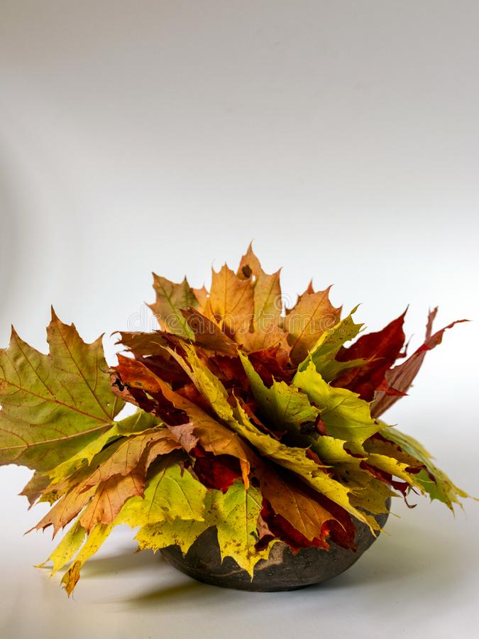 Photograph with colored maple leaves in a clay pot on a light background. Simple photograph with colored maple leaves in a clay pot on a light background royalty free stock photography