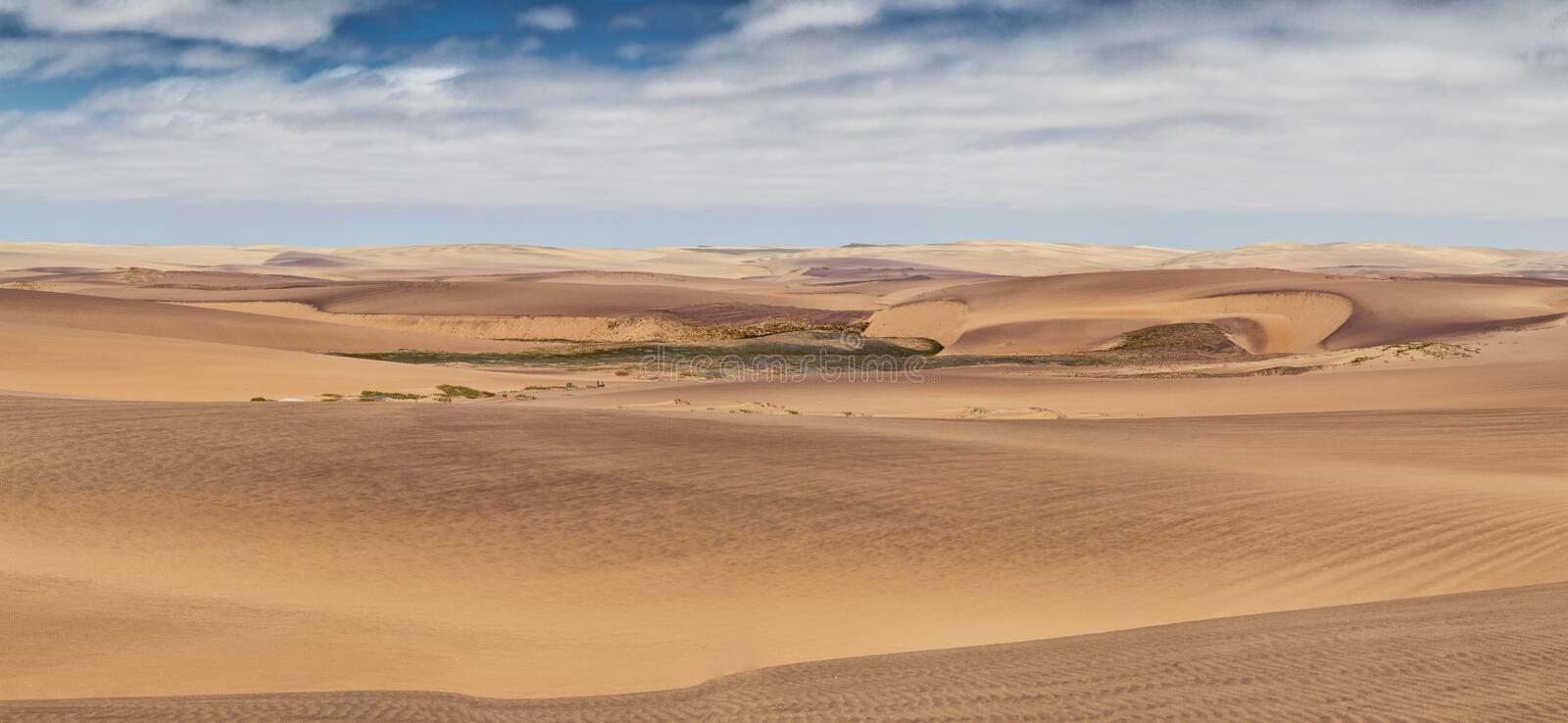 Photograph of dunes with vegetation of the Namibe Desert. Africa. Angola. Panoramic Photograph of dunes with vegetation of the Namibe Desert. Africa. Angola royalty free stock images