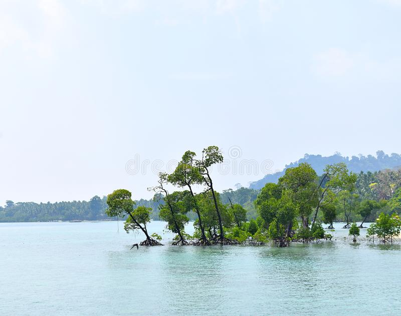 Green Mangrove Trees in Azure Sea Water and Clear Sky - Natural Background - Havelock Island, Andaman Nicobar, India royalty free stock images