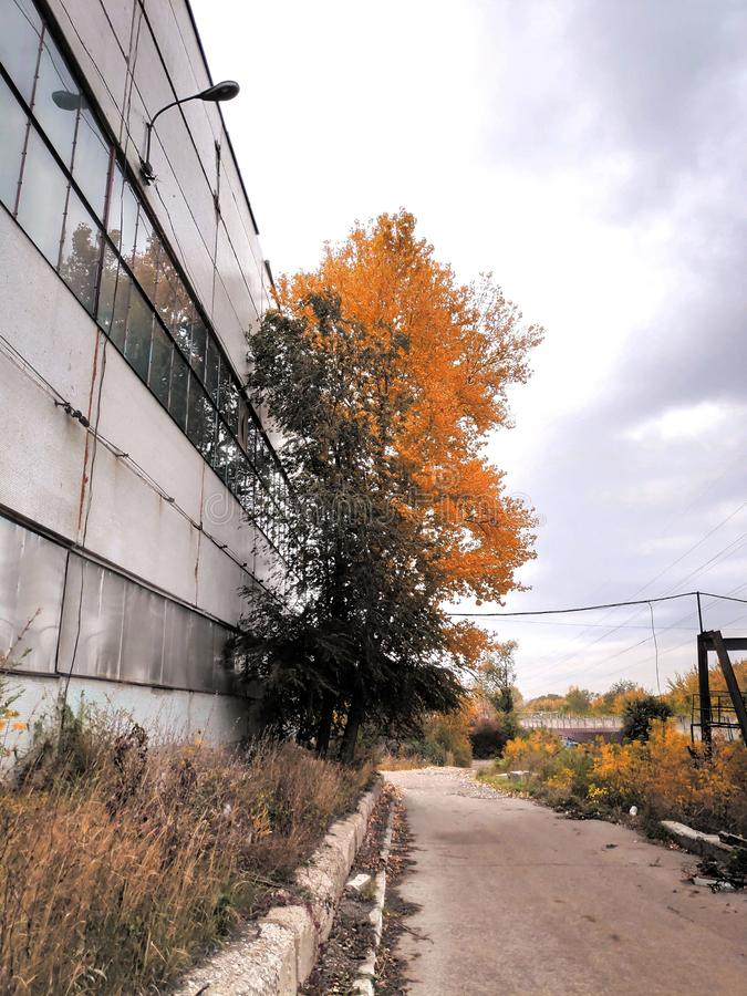 Photograph industrial landscape road, factory building with autumn tree half green, half yellow against a cloudy sky royalty free stock photography