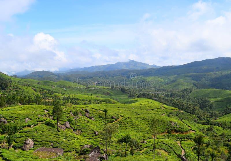 Tea Gardens, Green Hills, and Blue Sky - Natural Landscape in Munnar, Idukki, Kerala, India. This is a photograph of a landscape captured in Munnar, Idukki stock photos