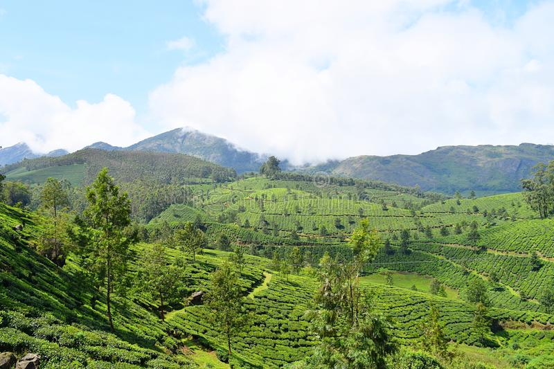 Lush Green Hills, Tea Gardens and Blue Sky in Natural Landscape in Munnar, Idukki, Kerala, India. This is a photograph of a landscape captured in Munnar, Idukki stock images