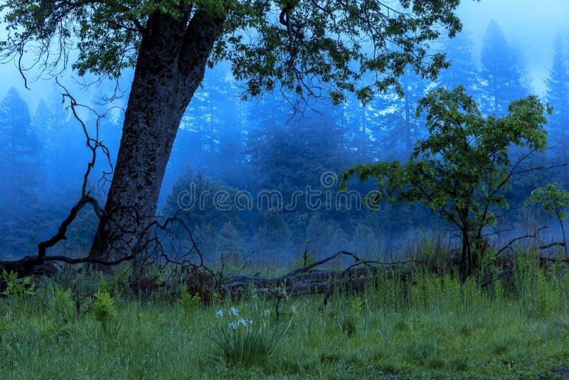 Fog in Yosemite Valley California royalty free stock photo