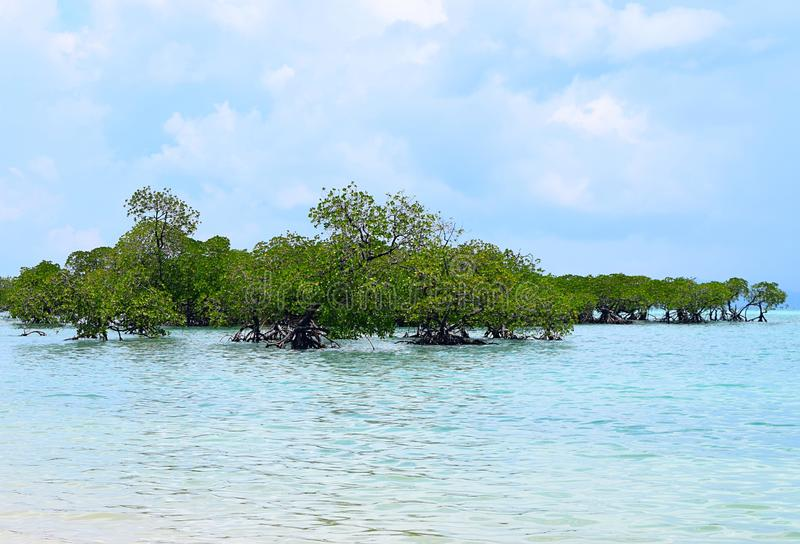 Mangrove Trees in Crystal Clear Transparent Blue Sea Water with Cloudy Sky - Neil Island, Andaman Nicobar Islands, India royalty free stock photos