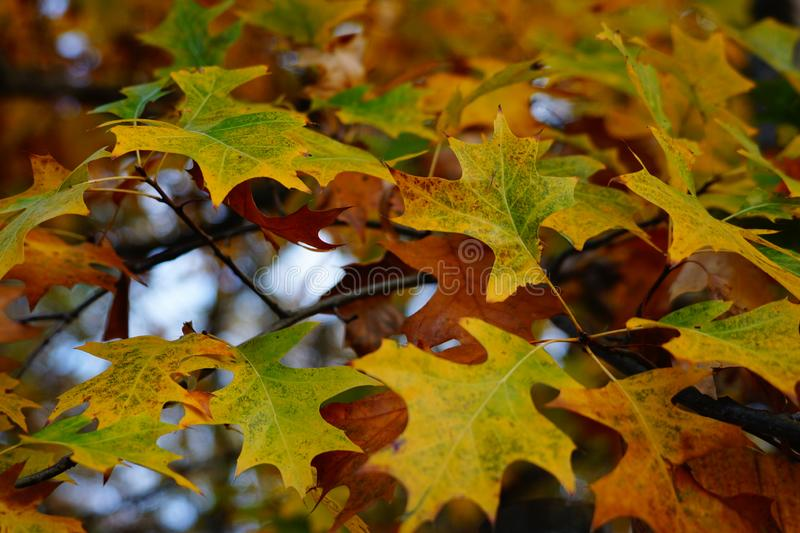 Autum leaves with yellow and orange color blur stock photos