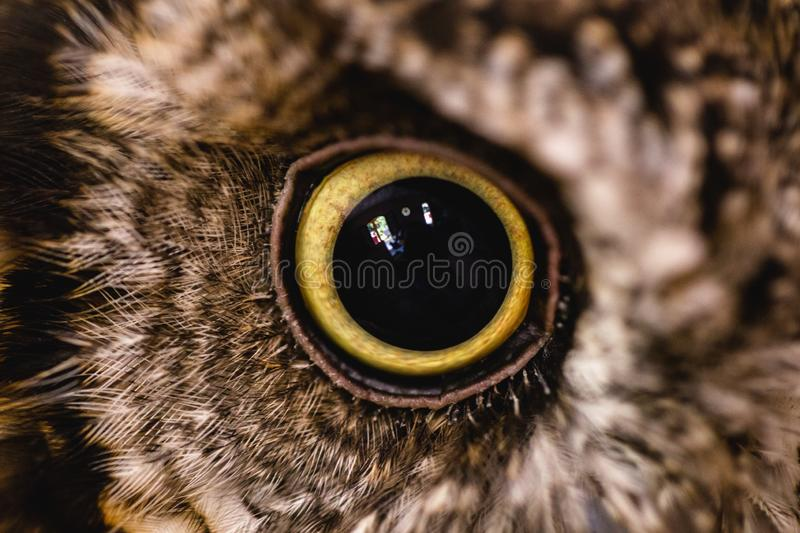 Photograph of an ow `s eye in high resolution. Eye of an animal in high quality, pupils in detail. Photograph of an owl`s eye in high resolution. Eye of an stock image