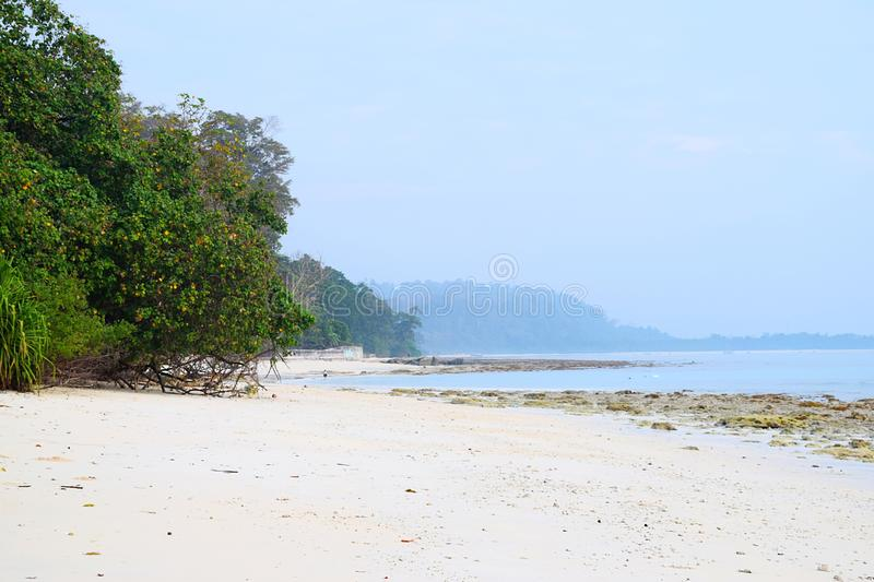 Pristine and Tranquil White Sandy Beach with Mangrove Trees with Azure Sea Water and Clear Sky - Kalapathar, Havelock, Andaman royalty free stock photography
