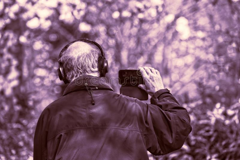 Photograph, Purple, Tree, Photography royalty free stock images