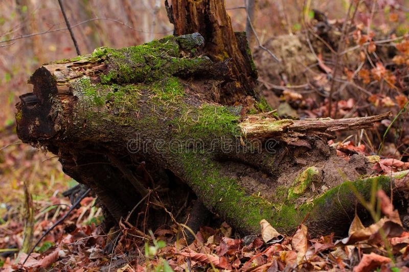 Decadent stump royalty free stock images