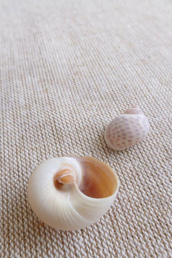 Seashells On Linen Background Still Life Stock Images