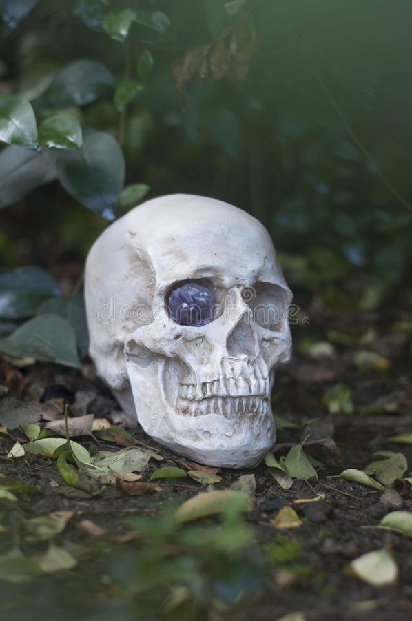 Skully stock images