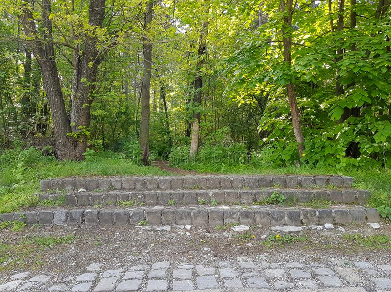 A photograph of stairs in woods, Vodno stock photo