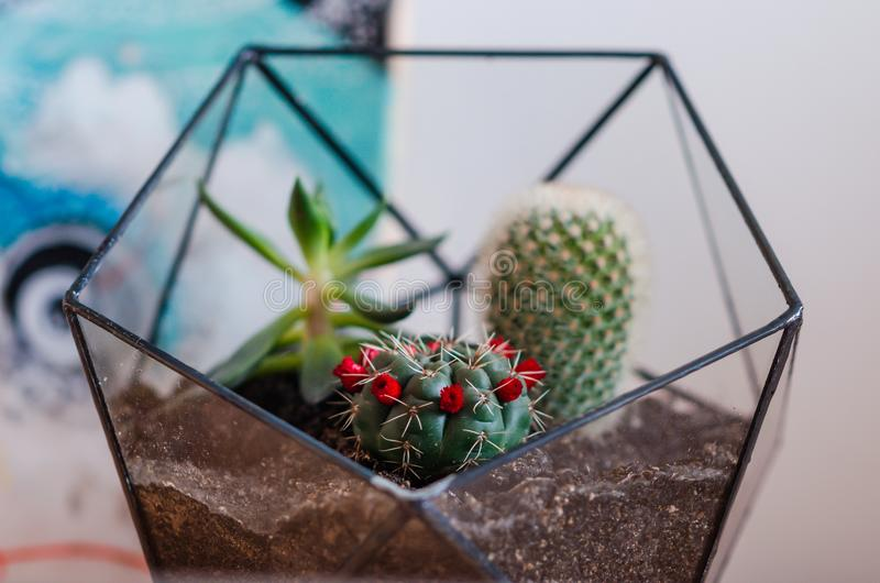 Photograph of terrarium with cactus and succulents. royalty free stock photography