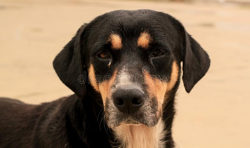 A dog looking at the camera. This photograph was taken in Matinhos, Paraná, Brazil. February 16, 2018 royalty free stock photos